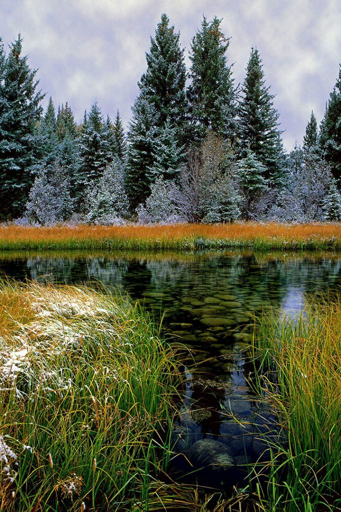 Winter grasses along the Snake River in the Tetons.  As usual I include of images of natural America to remind us that not all is lost yet. Places like this always remind me that there is still hope.  Maybe its not true that  the 1960s were the beginning of the end.