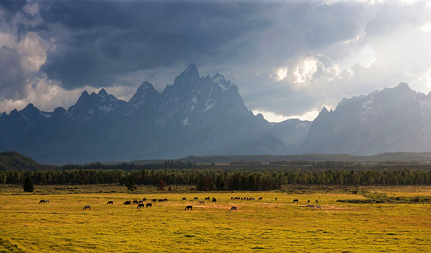 Horses in pasture in the Tetons in Wyoming.  Why are we letting the world burn when we need to be saving places like this.