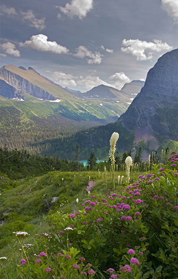 Grinnell Lake and wildflowers in Glacier National Park