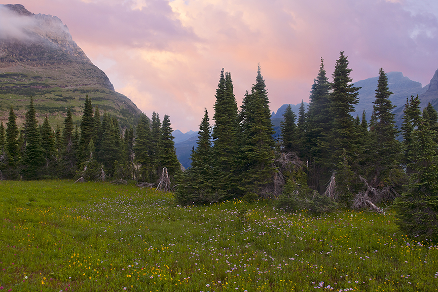 Logan pass, high meadow and pines, Glacier National Park