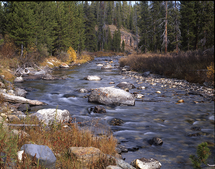 Galatin River in Montana.  Rivers like this used to be full of trout, but not now unless they are artificially stocked.