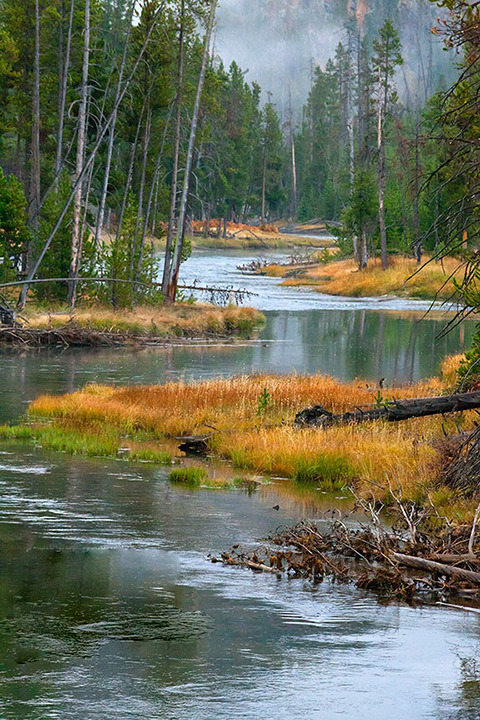 The Gibbon River in Yellowstone National Park.   Is Facebook an unbeatable political tool?  If so, places like this may not survive much longer.