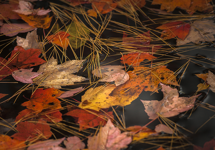 Autumn leaves on New Hampshire  Pond