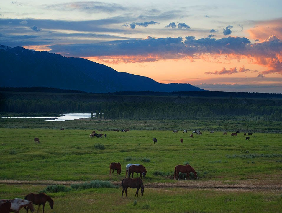 Horses grazing in Teton National Park.  The Snake river in the background.  And unfortunately In many ways America is not a democracy.