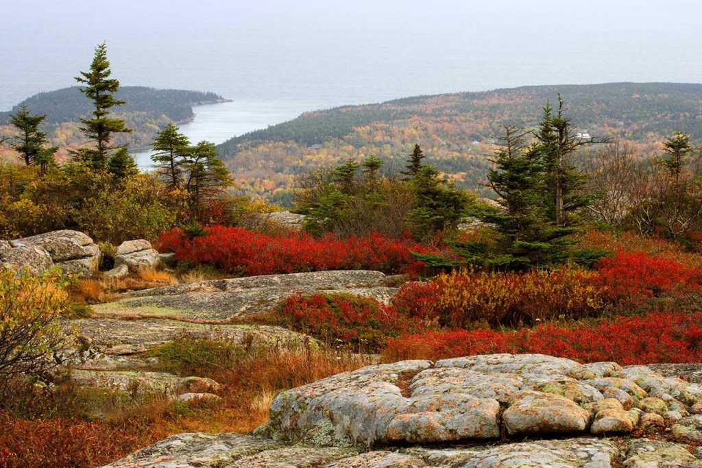 Red Bushes on top of Cadillac Mountain in Acadia National Park in Maine.   Is Facebook an unbeatable political tool?  If so, places like this may not survive much longer.