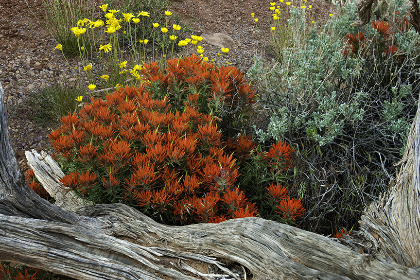 Desert Paintbrush in Arches National Park.  This article is about the best books on climate change and extinction