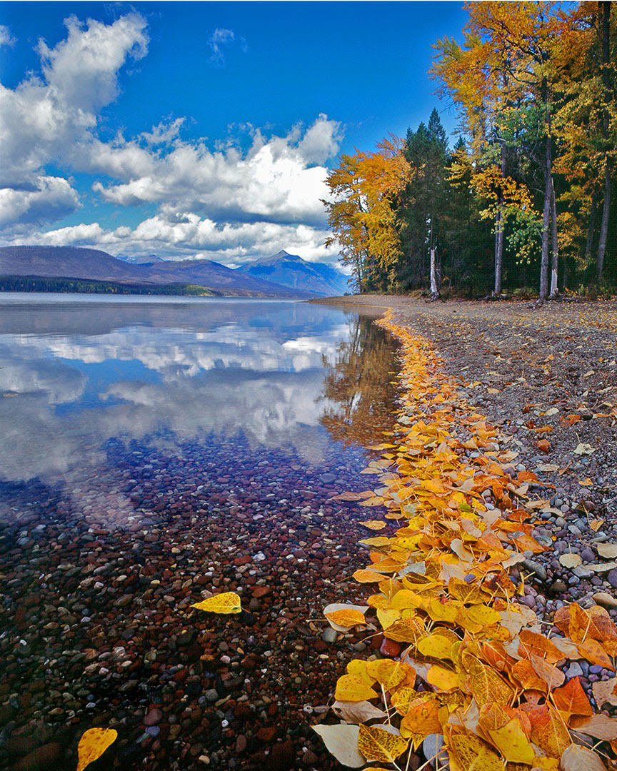 Autumn Leaves along the shore of Lake McDonald in Glacier National Park.