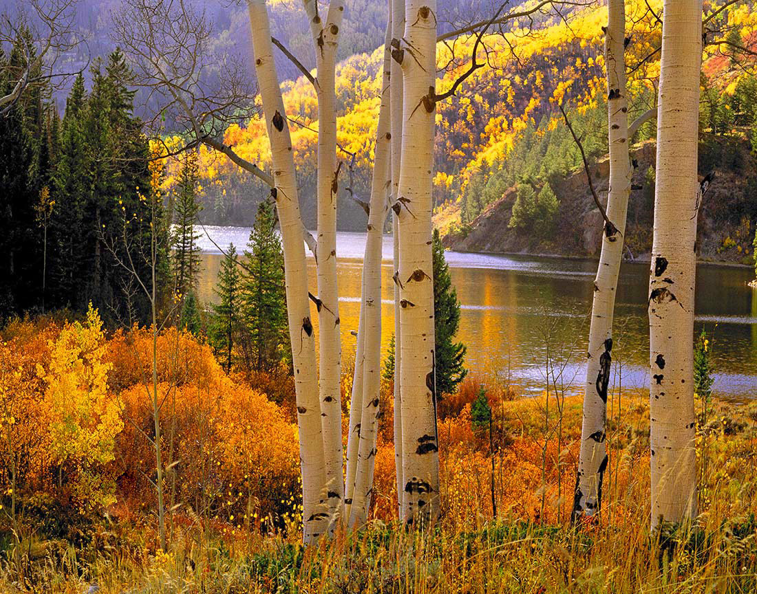 Aspens and Lake, Cataract Lake, Colorado.  One of the best of our 22 favorite landscape images.