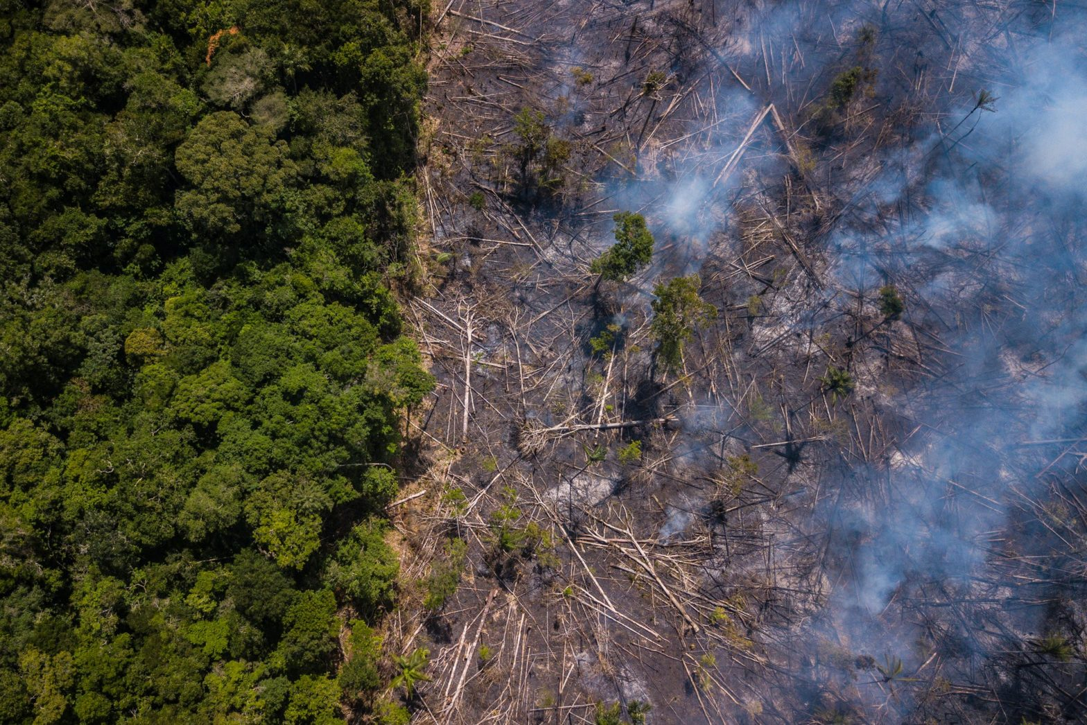 The Brazilian Rain Forest is dying