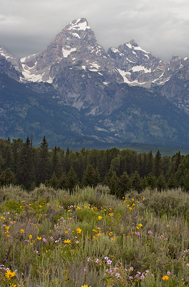 Wildflowers and the Tetons in Wyoming.  There have been some big fires in the Tetons but nothing like what is happening in CA right now.