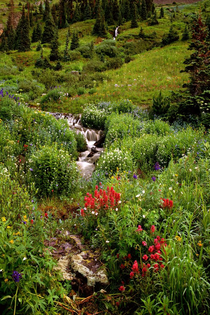 Yankee Boy Creek in Yankee Boy Basin in Colorado