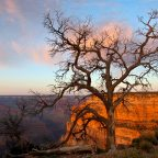 Pictures of Grand Canyon National Park