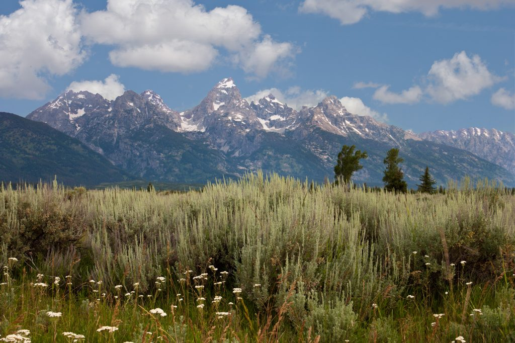 Sage and Tetons in Wyoming.  Cheer up with a free screen saver of this image.