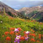 Pictures of Yankee Boy Basin Colorado