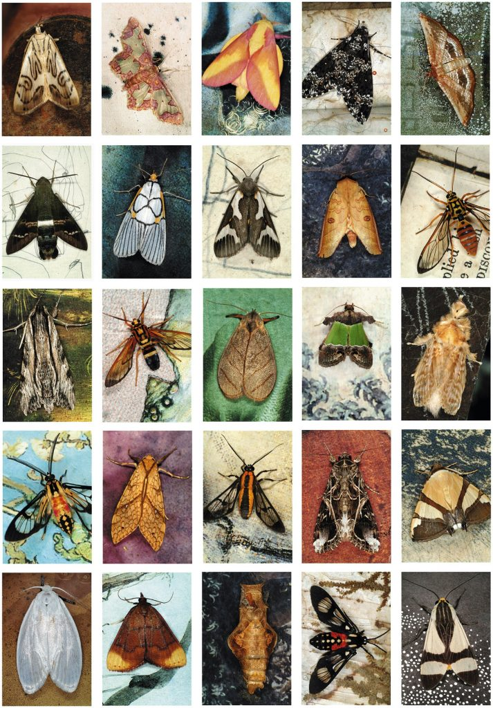 The above images of butterflies  are by Emmet and Edith Gowin/Pace-MacGill Gallery