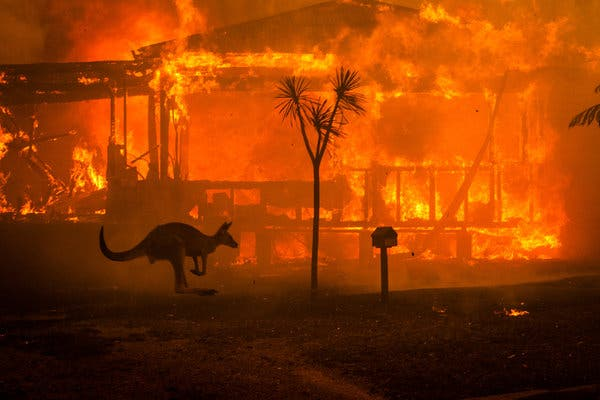 Australia during the current 2019-2020 fire.  I keep reading that 500 million animals died in just one state of Australia during just one period of this fire.  This seems unbelievable to me.  So I keep checking this number but it seems to be real.   The Australian fires are far bigger that the US wildfires  this year or last year.  I think this is something really new and really scary.  What a strange world we now live in