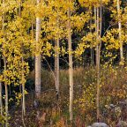 The Aspens of Conejos Valley