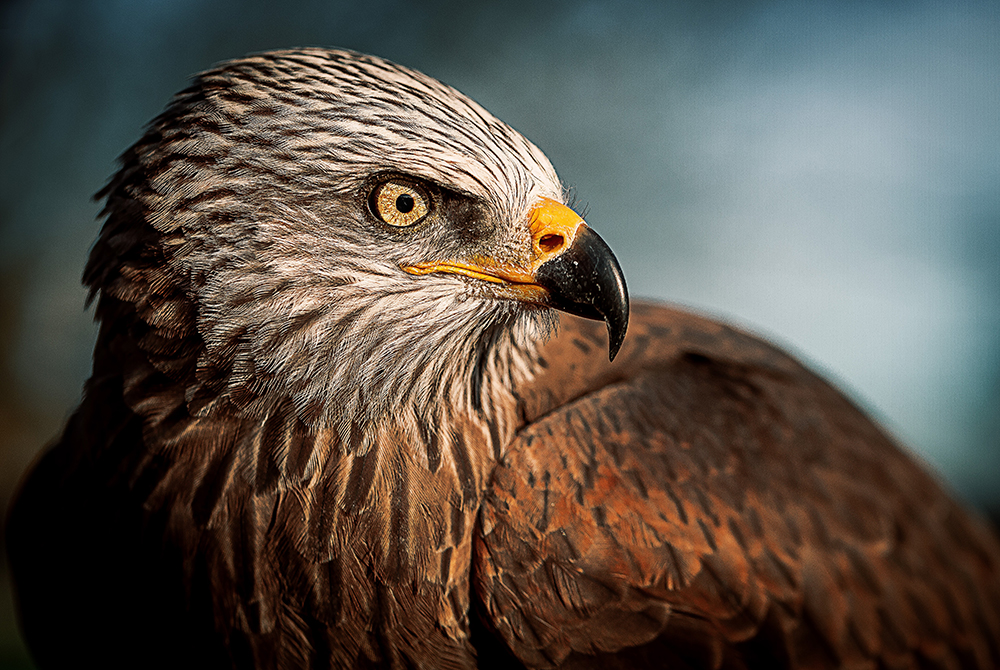 Bald Eagle.  Almost all the recent, major, human epidemics were viral spillovers from wild animals to humans.  The animal in this picture is not likely candidates for spillover though.