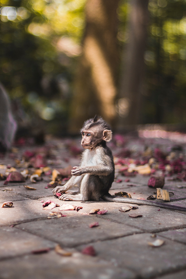Monkey.  The IPCC says we have only 20 years left if we want to save animals like this.