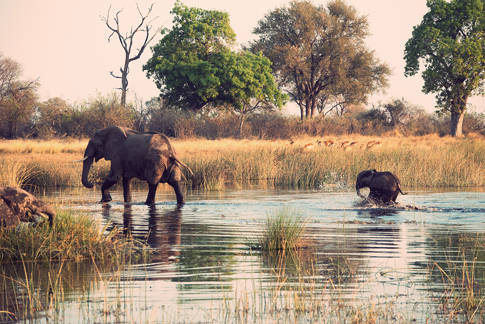 Elephants in African water hole.  The IPCC says we have only 20 years left if we want to save animals like this.