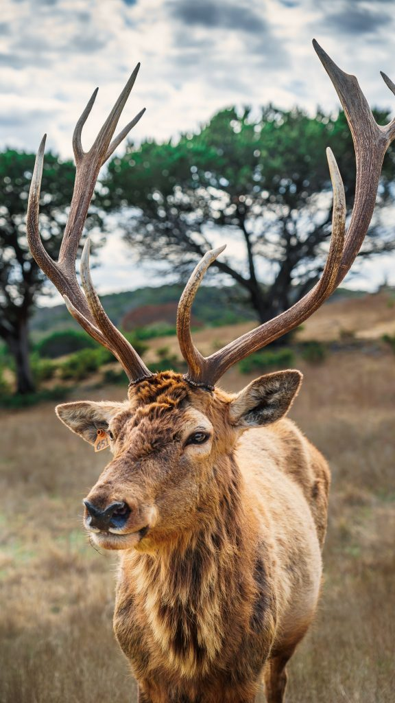 An American Deer.  Almost all the recent, major, human epidemics were viral spillovers from wild animals to humans.  Because scientist were aware of this, scientists predicted the corona pandemic.  The animal in this picture is not likely candidates for spillover though.