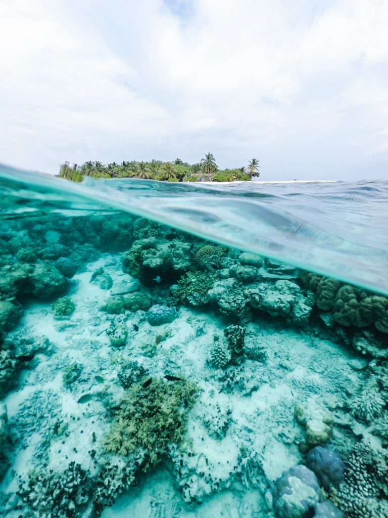 One of the worlds still healthy coral reefs.