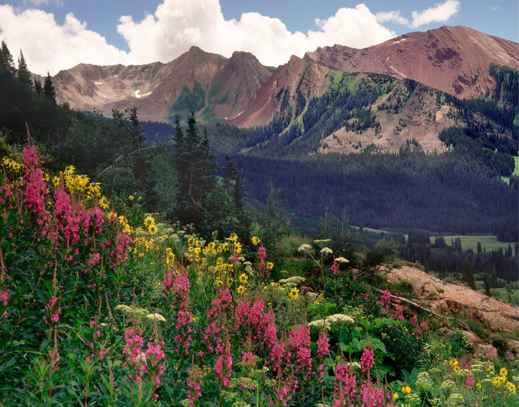 Fireweed in Gothic Valley near Crested Butte, Colorado.  Where did the Corona pandemic really come  from?  One answer is that we didn't leave enough of the world natural, like this place is.