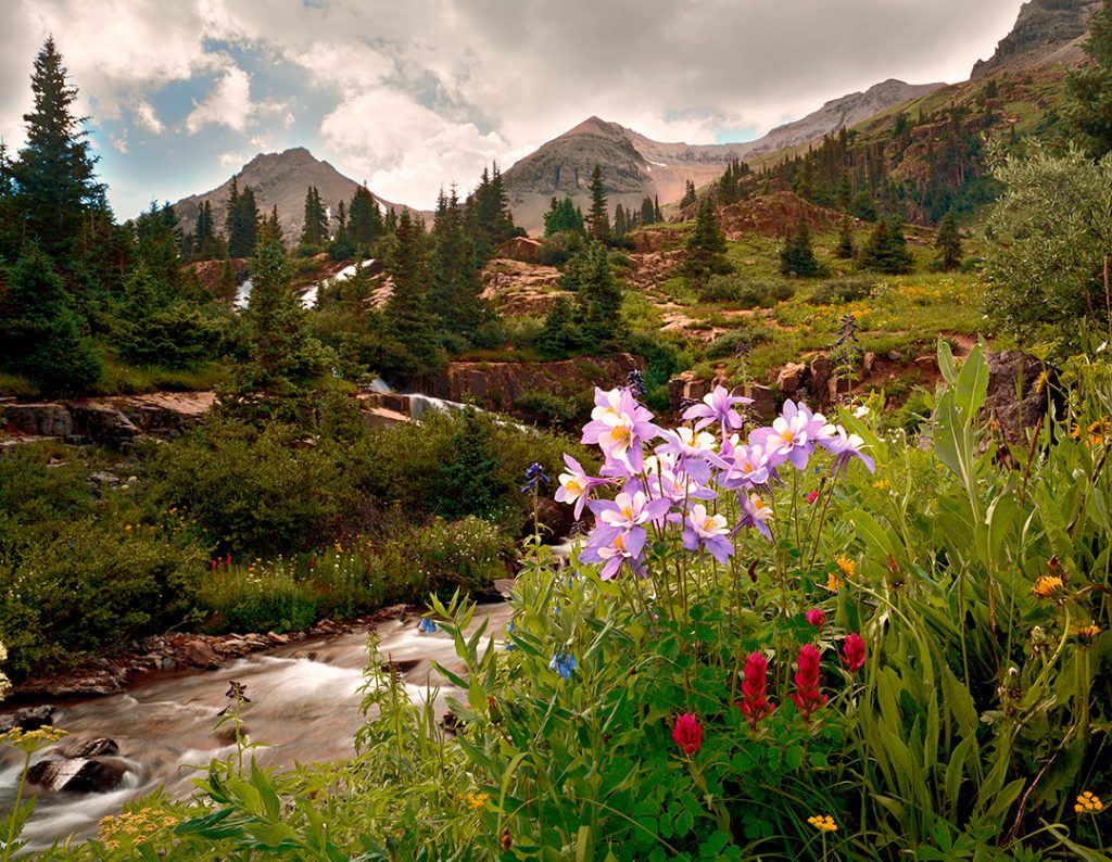 Columbines and Creek in Yankee Boy Basin in Colorado.  Cheer up with a free screen saver of this image.