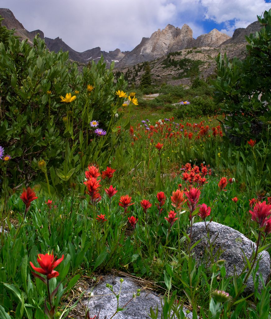 Indian paintbrush in the Wind River Mountains of Wyoming.  I once camped in this spot and climbed in the peaks for a few days.  While we are thinking about How to save the world in 1000 beautiful images, remember that places like this will be some the first to be destroyed as the world heats up.