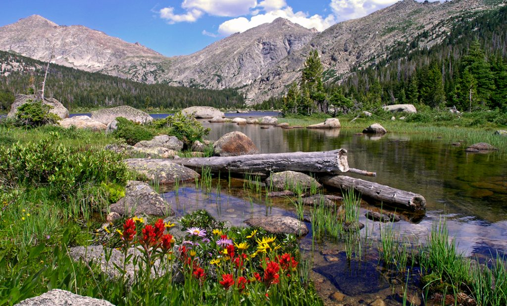Donald Lake and wildflowers in the Wind River range.  Urgent action now is vital to control the Corona virus.  Without it millions will die and never experience the beauty of our earth again.