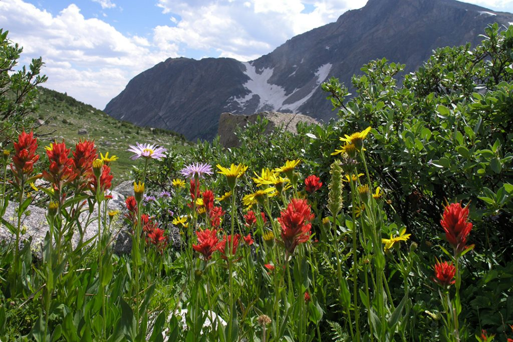 Wild Flowers and Raid Peak in the Wind Rivers.  Republicans are gaming the pandemic.  If they can't be stopped, many fewer Americans will live to visit beautiful places like this one.