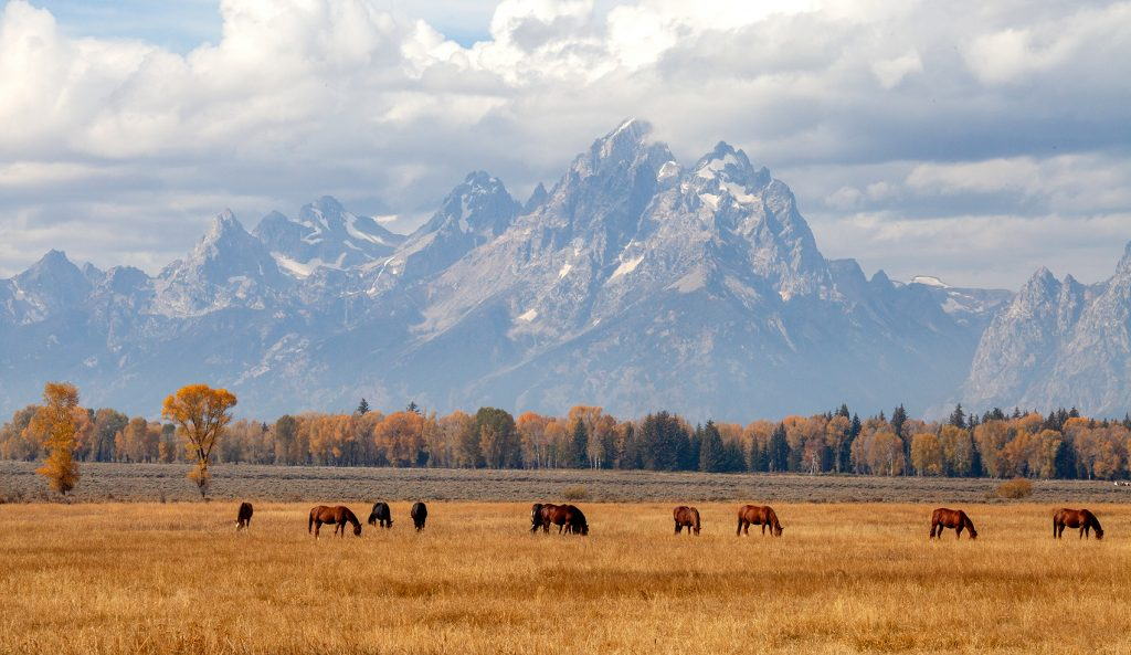 More horses and Tetons