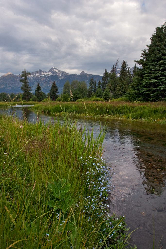 Blacktail Ponds in the Wyoming Tetons.  African elephants.  The Scientific Revolution & the clockwork world seems eons away from how we see nature now.  But there are still many similarities of our view of nature and the 17th century view.