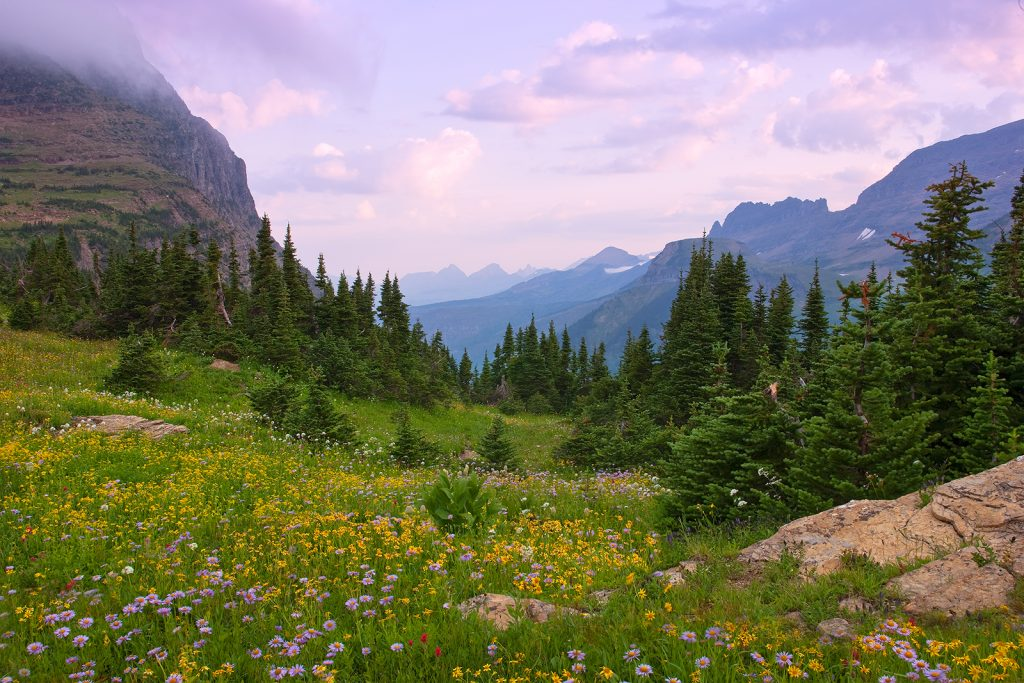 Logan Pass in Glacier National Park in Montana.  African elephants.  The Scientific Revolution & the clockwork world seems eons away from how we see nature now.  But there are still many similarities of our view of nature and the 17th century view.