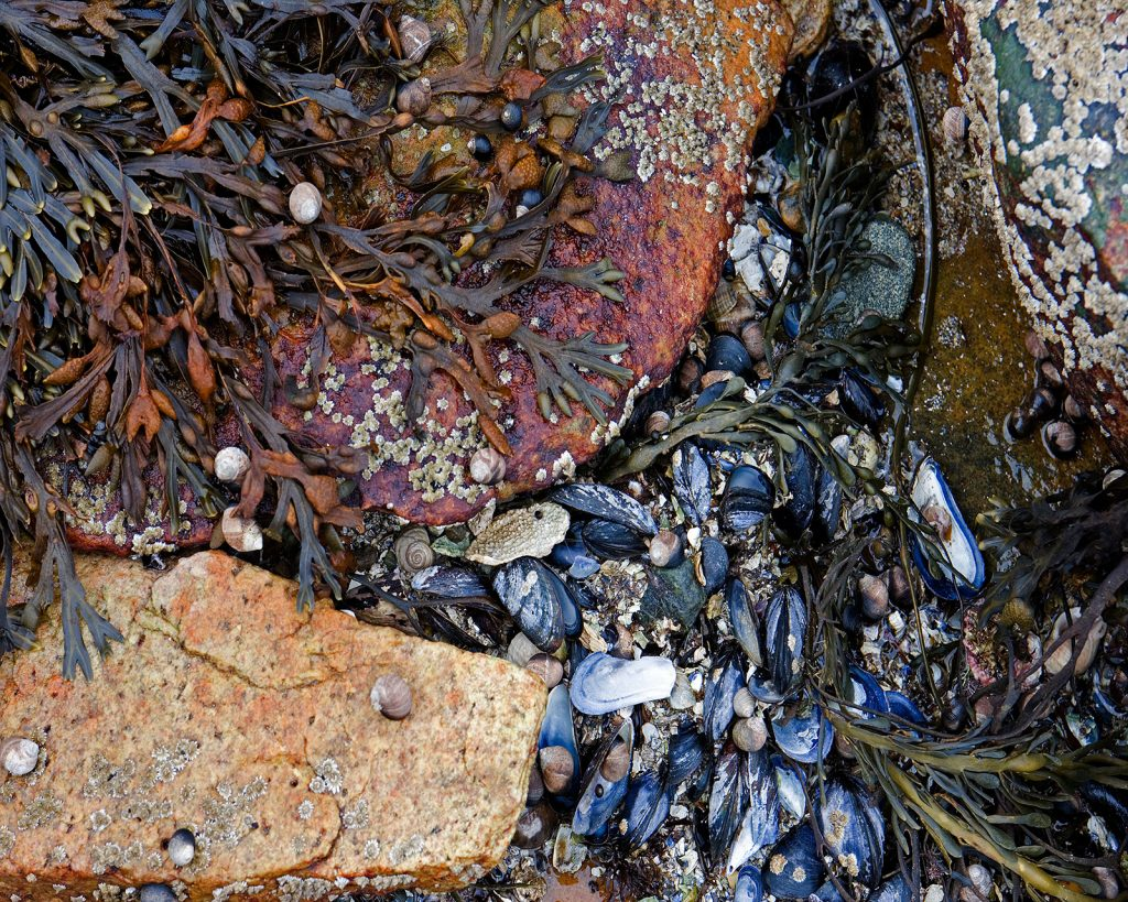 A tide pool on a Maine Beach.  The crystalline water here is actually about 3 feet deep. All of this is deep underwater.  African elephants.  The Scientific Revolution & the clockwork world seems eons away from how we see nature now.  But there are still many similarities of our view of nature and the 17th century view.