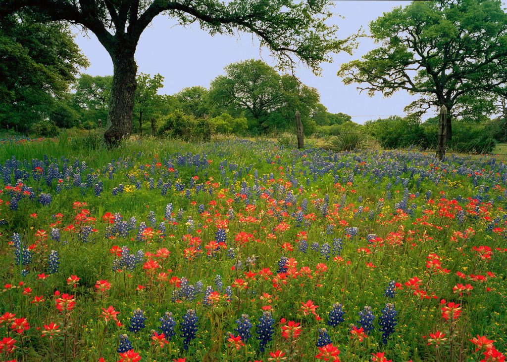 Wildflowers in hill-country Texas.  De-Forestation is Soaring in Brazil but luckily there are still a few places where nature is not in nearly so bad a place.