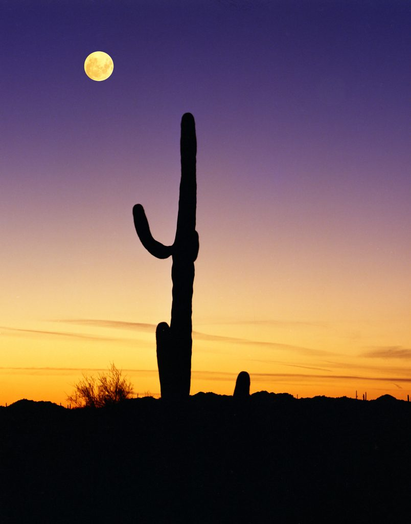 Moon and Saguaro in Organ Pipe National Monument.  Now that rent-seeking is ruining America, I despair for places like this.  I'm afraid we will not have them much longer.