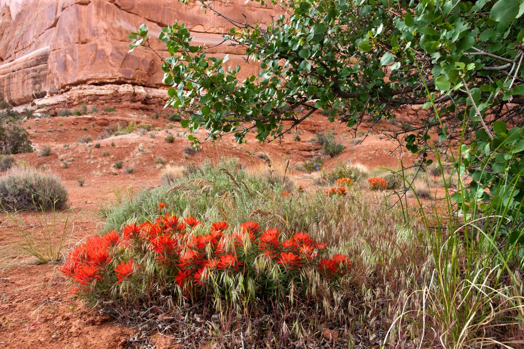 Paintbrush in Arches National Park.  Much of America doesn't need changing.  But much American has to be changed if it is to survive as a decent and just state.  But Is it possible to change America?