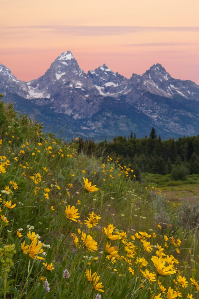 Blacktail ponds, The Tetons with yellow Arrowroot.  Some rainforests are now giving off more CO2 than they absorb.  This is definitely very bad news for places like this.