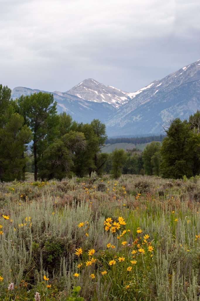 Valley floor and  peak in the Tetons.  Now that rent-seeking is ruining America, I despair for places like this.  I'm afraid we will not have them much longer.