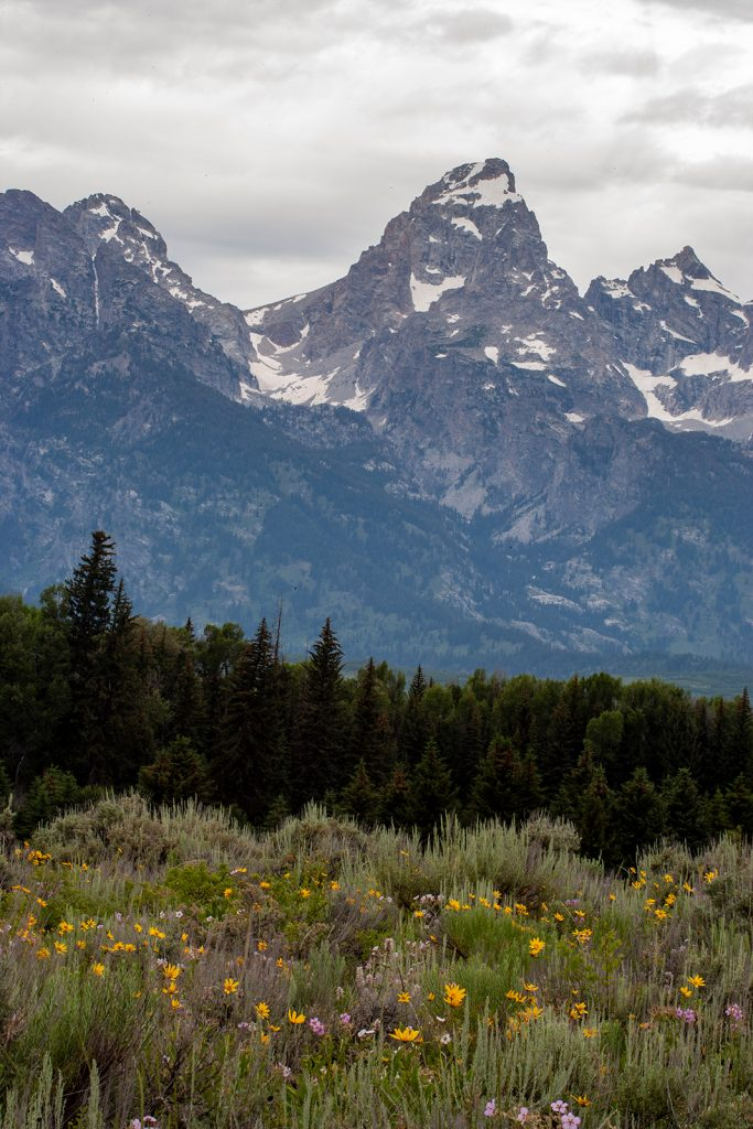 The Tetons and wildflower meadow.  This is a long way from the politics of William Barr, Trump's Chief Enabler.  At least there are a few things in American more honest and than Trump and Barr.
