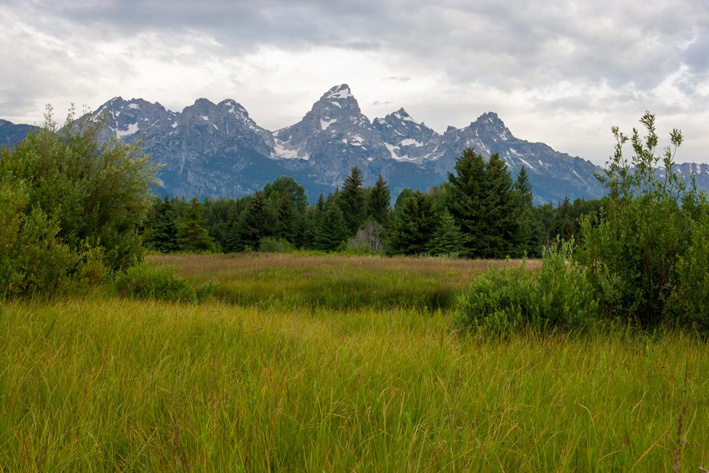 Grassy bottom lands along the Snake River in the Tetons.  Now that rent-seeking is ruining America, I despair for places like this.  I'm afraid we will not have them much longer.