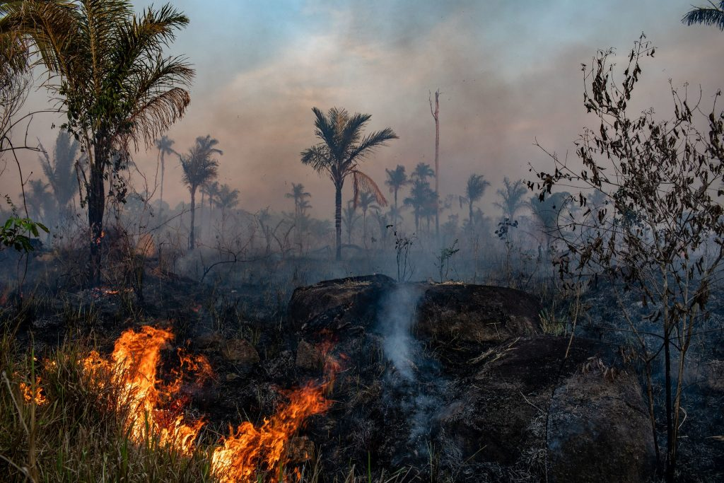 Burning the forest in order to clear the land for cattle.  Last year in the state of Mato Grosso, Brazil.  Photo by Vigor Moryama for the New York Times.  De-Forestation is Soaring in Brazil