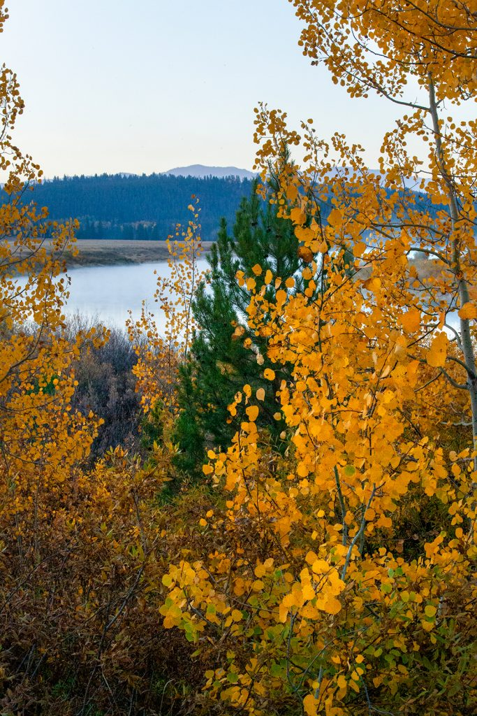 Aspens and pines at the Oxbow in the Snake River in Jackson Hole Wyoming.   Are wars inevitable? We can choose our our history and save places like this if we try hard enough.