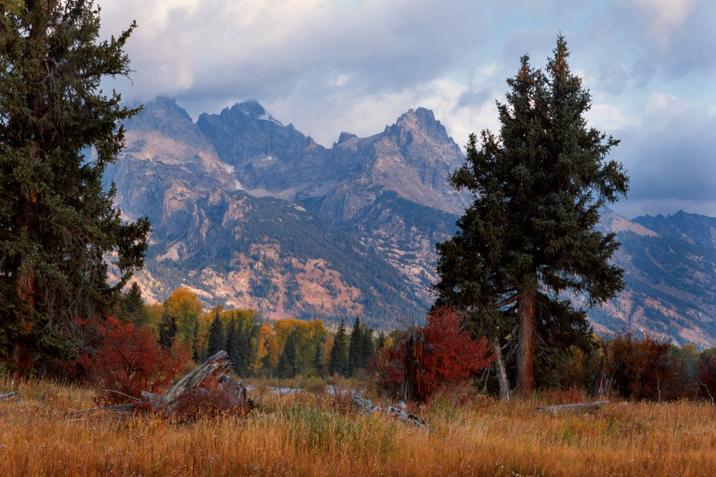 Red Bush and stump in the Tetons in Wyoming.   It may be that the Republican Party is cutting its own throat.  That can only be good for places like this.