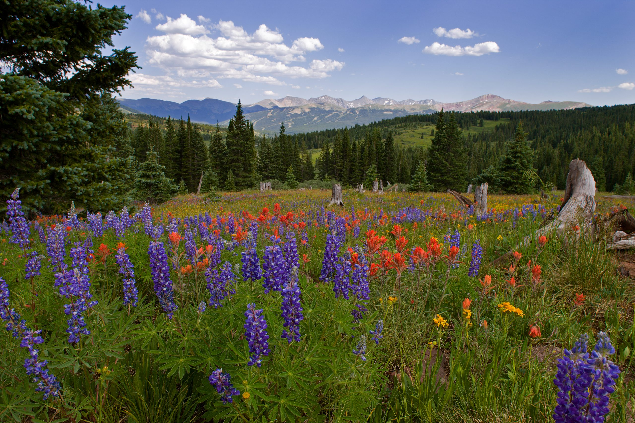 Shrine Pass in Colorado.   It may be that the Republican Party is cutting its own throat.  That can only be good for places like this.