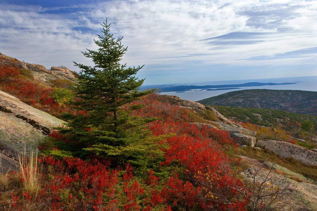 Cadillac Mountain and The Atlantic Ocean in Maine.   It may be that the Republican Party is cutting its own throat.  That can only be good for places like this.