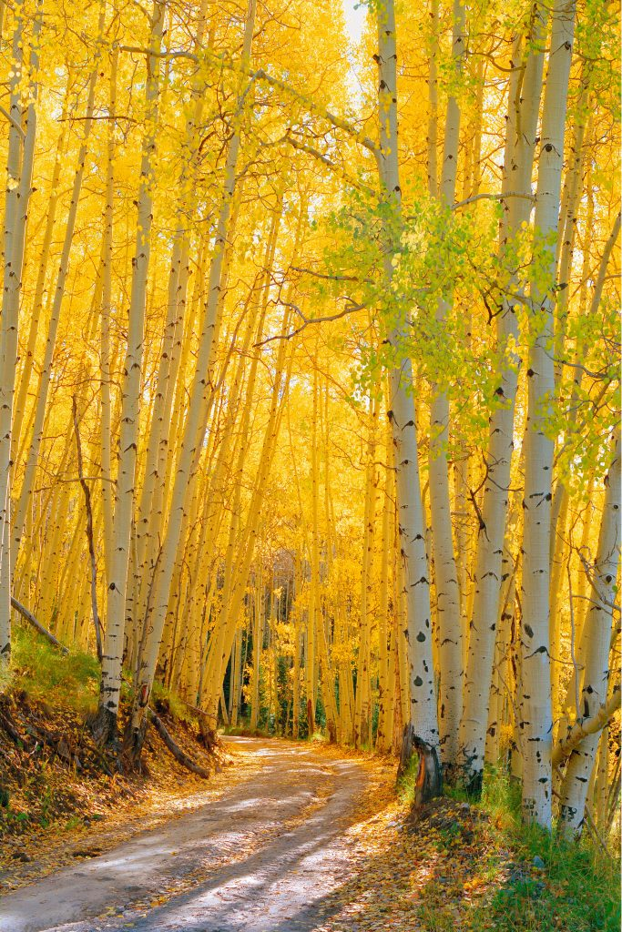 Last Dollar Road, near Telluride in Colorado.  Why are we letting the world burn when we need to be saving places like this.