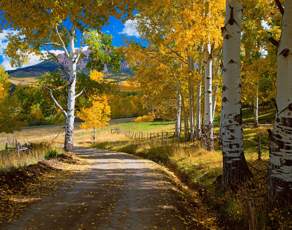 Last Dollar Road near Telluride, Colorado.  No pandemics and a beautiful earth go together.  But we are destroying our earth and many pandemics are in our future.    How to stop the next pandemic?