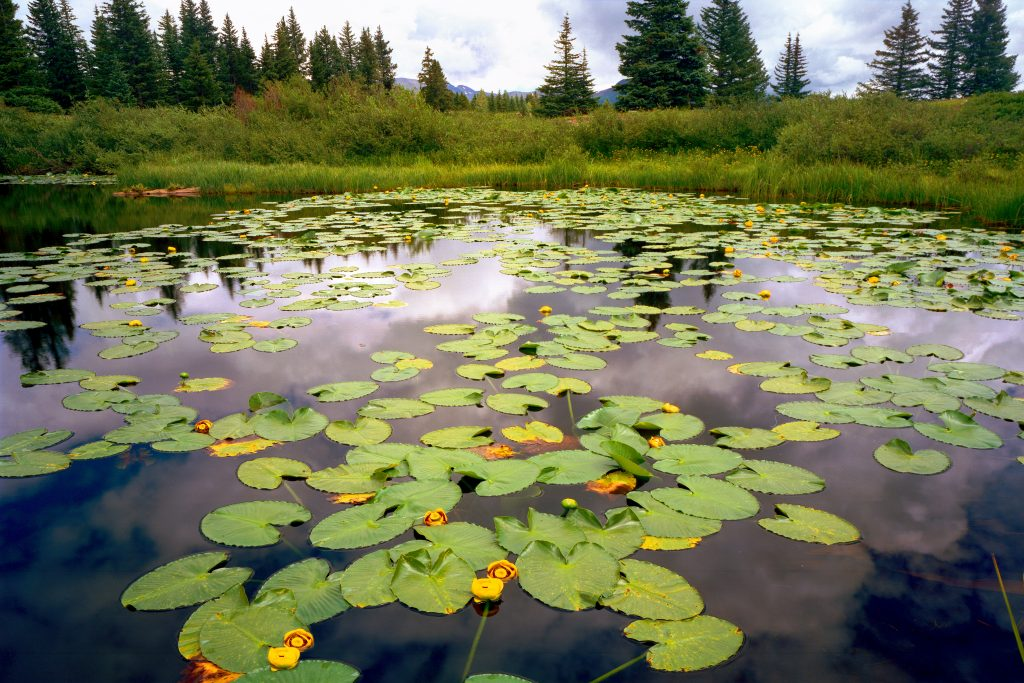 Lily pond and sky the the wind river mountains of Wyoming.  No pandemics and a beautiful earth go together.  But we are destroying our earth and many pandemics are in our future.    How to stop the next pandemic?